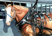 Draft Horse, Equine Art - Almost Showtime