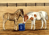 Miniature Horse, Equine Art - At the Salt Block