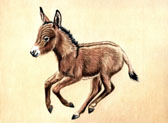Donkey and Mule Art - Baby Donkey in a Hurry