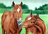 Mares and Foals, Equine Art - Baby Talk