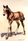 Dressage, Equine Art - Baby Warmblood