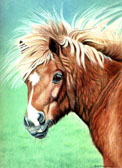 Pony, Equine Art - Bad Hair Day