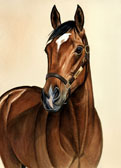 Thoroughbred, Equine Art - Barbaro