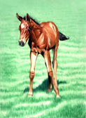 Mares and Foals, Equine Art - Billy