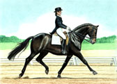 Dressage, Equine Art - Black Dressage Mare