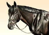Dressage, Equine Art - Jack