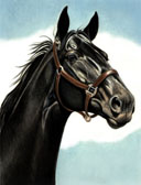 Mares and Foals, Equine Art - Black Mare