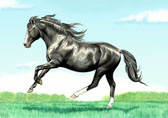 Pony, Equine Art - Black Welsh Pony Stallion