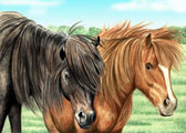 Miniature Horse, Equine Art - Black and Chestnut Mini