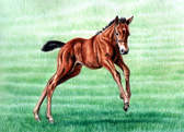 Mares and Foals, Equine Art - Born to Run