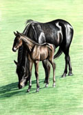 Standardbred, Equine Art - Bright Sun