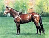 Thoroughbred, Equine Art - Chocolate Mocha