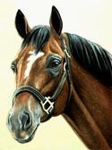 Thoroughbred, Equine Art - Cigar