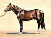 Thoroughbred, Equine Art - Citation