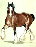 Draft Horse, Equine Art - Clyde Trotting
