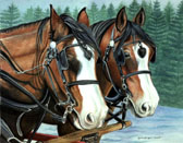 Draft Horse, Equine Art - Clydes in Winter