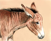 Donkey and Mule Art - Crabby Donkey