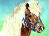 Pony, Equine Art - Cute Little Face