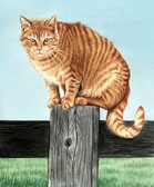 Dag on the Fencepost
