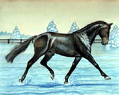 Dressage, Equine Art - Dancing in the Snow