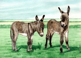 Donkey and Mule Art - Donkey Foals