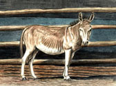 Donkey and Mule Art - Donkey by the Barn