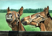 Thoroughbred, Equine Art - Don't Bug Me