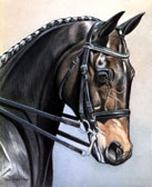 Dressage, Equine Art - Dressage Mare