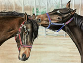 Thoroughbred, Equine Art - Ear Grab