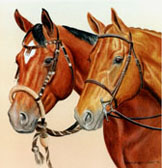 Equine Art - English and Western