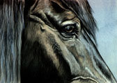 Eyes of Equus