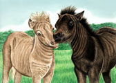 Miniature Horse, Equine Art - First Kiss