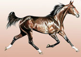 Standardbred, Equine Art - Freedom