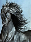 Friesian Majesty