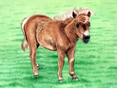 Miniature Horse, Equine Art -Get Shorty