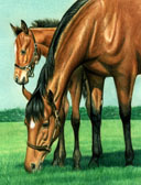 Thoroughbred, Equine Art - Gotcha By the Ear Mom