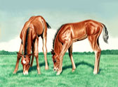 Mares and Foals, Equine Art - Grazing Buddies