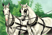 Carriage Driving, Equine Art - Grey Warmbloods