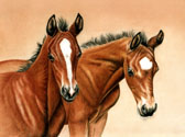 Mares and Foals, Equine Art - Half Brothers