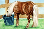 Pony, Equine Art - Head in the Bucket