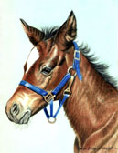 Mares and Foals, Equine Art - Her First Halter