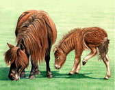 Miniature Horse, Equine Art - I Cant See Where You are