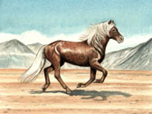 Icelandic Horse Cantering