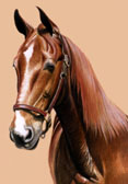 Saddlebred, Equine Art - Imperator
