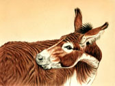 Donkey and Mule Art - Itchy Donkey