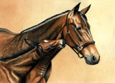 Standardbred, Equine Art - Licking Mommy