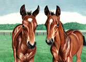 Thoroughbred, Equine Art - Little Beauties