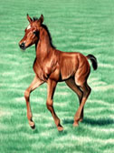 Mares and Foals, Equine Art - Look at Me GO!