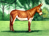 Donkey and Mule Art - Mammoth Donkey Chestnut