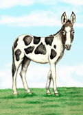 Donkey and Mule Art - Mammoth Donkey